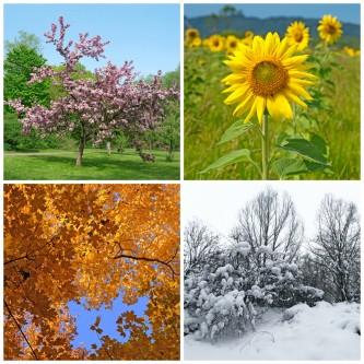 de engelen van de seizoenen